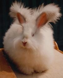 rabbit2sm