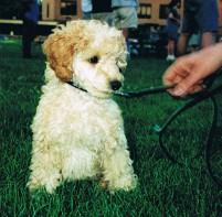 lloyd puppy